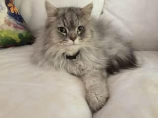 Paris cat, lovely Hermes