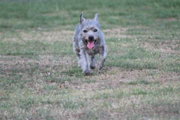 While we were in the UK, we watched Remy, who loved to run in the park!