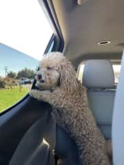 Fergie enjoying a car ride around the neighborhood