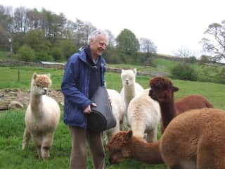 Paul feeding the alpacas in the Yorkshire Dales