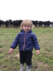 Our grandson and cows on the fence line.