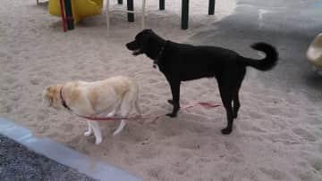 Chloe and my neighbor's dog, Sadie