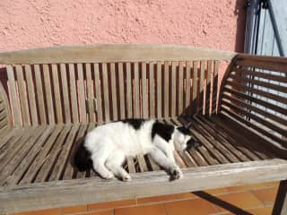 Kitty on the terrace bench