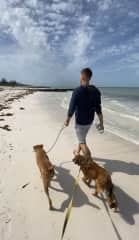 Walking with dogs from the animal shelter in Mexiko