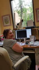 Lulu the cat assists Sue with office work.