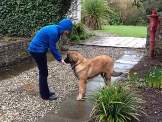 Sharon with Nala the most loyal Leonberger who visits us regularly.