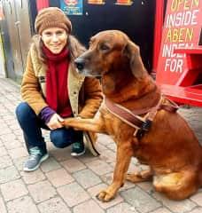A dog I fell in love with in Copenhagen