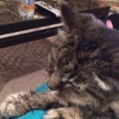 Smokey - 18 year old special needs but very sweet
