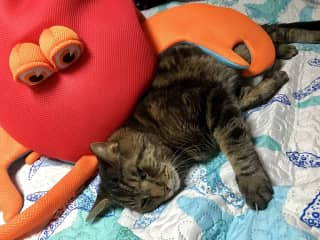 Jack sleeping with Larry the Lobster the boat mascot.