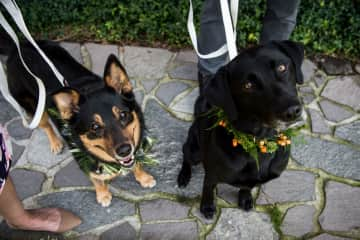 Moxie & Zeke at our Wedding