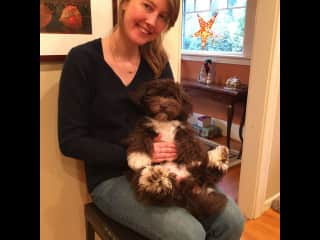 Hanging out with my Mom's adorable Havanese, Coco!