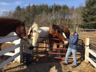 We're grateful that these retired carriage horses have found a forever home!