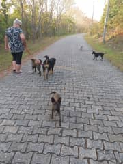 Afternoon walk with Soda, Charlotte, Marvin, Horace and Queenie