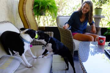 Lucie with Baxter and Fenway. Pet-sitting in Ft. Myers, Florida. April 2018