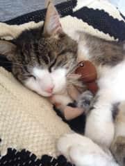 Our last cat Felix
