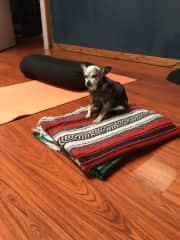 Sporty was Sherry's Yoga assistant.