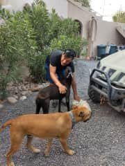 Mati with Dulce, Cisco and Pugli while house and pet sitting in La Paz, Mexico