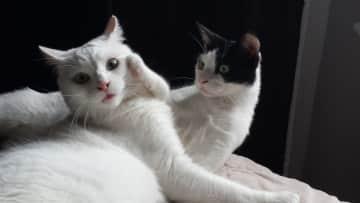 Casper and Romeo playing
