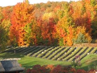 A portion of our Michigan lavender farm.