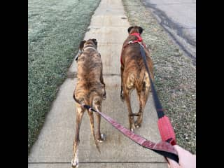 Walking Ernie and Josie
