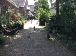 Several members of the Utrecht Feline Walking Club (Buts, Mina and friends almost daily take me for a walk around the block).