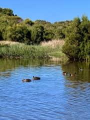 Wonthaggi wetlands