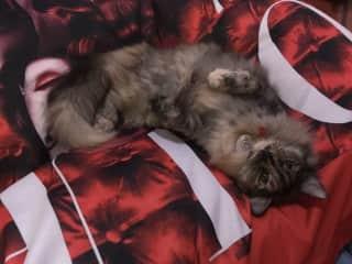 Olivia, my own cat.