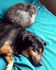 With his cat sister. This happens once in a blue moon, she mostly wants him to stay away hehe...