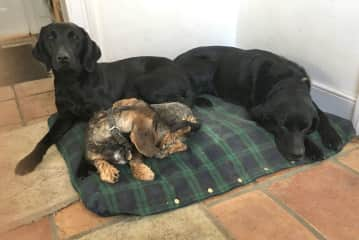 The lovely dogs of Debs from Great Bardfield
