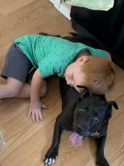 Neo cuddling another dog from our dog sitting business