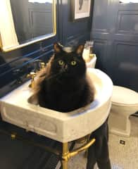 Harry loves the sink