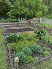 "Organic greens, produce, and honey are plentiful at ""the farm""."