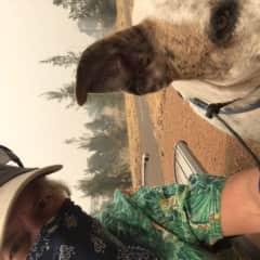 Dog sit Canberra Australia 2020 bushfires