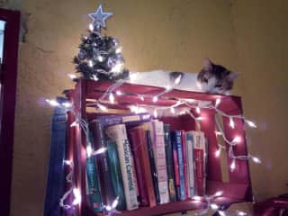 Ginger likes to sleep by the Christmas tree each year