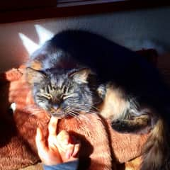 This is my beloved Shadow, who is purring on the other side of the rainbow bridge now.