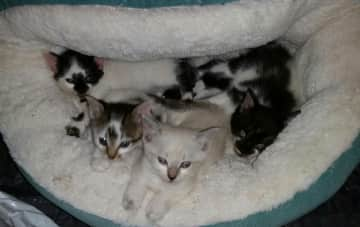 One of the litters I have fostered. Oliver is in the front!