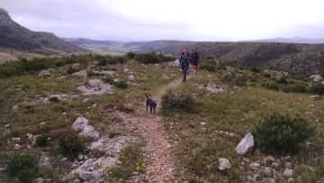 Walking with friend's dogs near Perpignan France