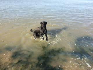 Malachi enjoying a romp in the sea (a short drive away)