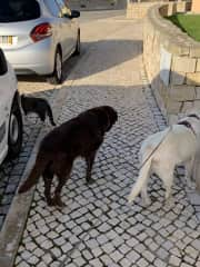 3 times daily walks in Portugal. The cats walked the entire route, too!