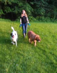 Danielle walking one of our favorite doggie clients of 10 years, Eragon and Chewy