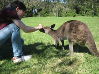 A free wallabie looking for our company - maybe he smelled the pizza we were eating :)