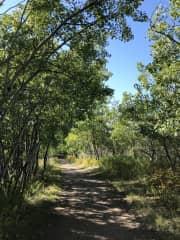 Fish Creek Park - Our Favourite trail.