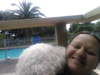 Kisses from Paddy, the lovable labradoodle - Auckland, NZ (2018)