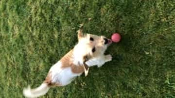Molly with favourite pass time her ball!