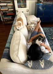 Animal Couch: 2 special dogs and a magical cat!