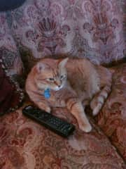 Morris in control of the TV remote