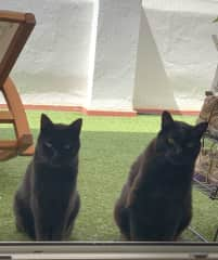Jack and Stan guarding the entrance to the terraza