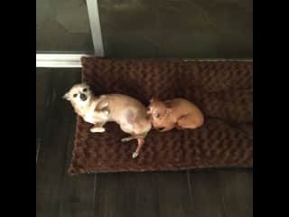 Java and Mocha resting in one of their beds