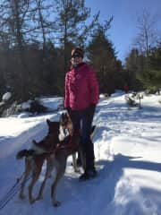 Dog sledding adventures in the U.P. of Michigan.