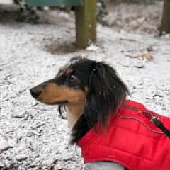 Jax in the snow